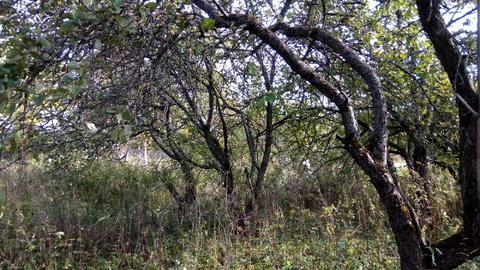 Продажа дачи с земельным участком 11 соток в Выскодно, Валдайский райо - Фото 2
