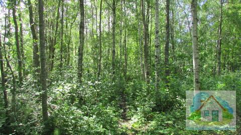 Продается земельный участок 25 сот в пос. Снетково вблизи 2-х озер - Фото 4