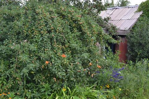 Продам сад в Тракторосаде 2 - Фото 2