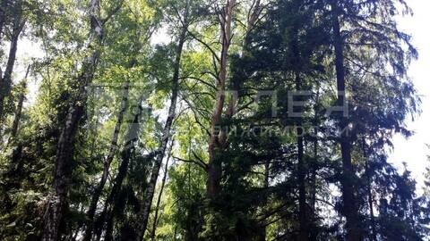 Лесной участок 8 сот. - Фото 4