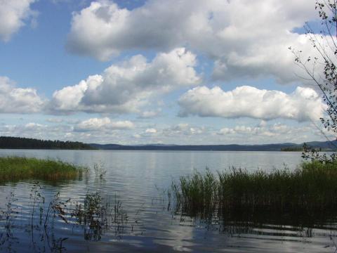 Участок 2 га в 2,5 км. от поселка Политотдел Любинского района - Фото 3