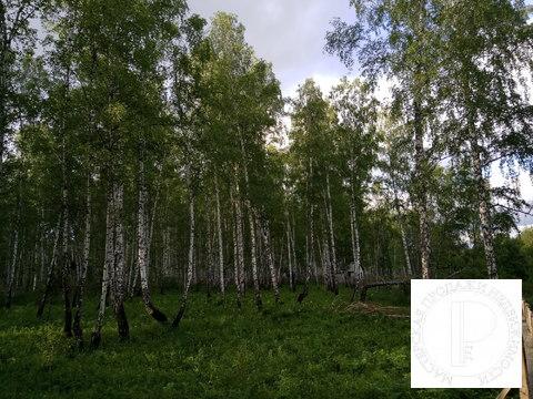 40 соток с лесом на станции Овинный - Фото 3