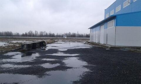 Продам производственное помещение 1300 кв.м, м. Рыбацкое - Фото 5