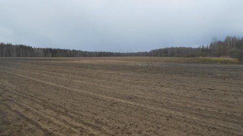 Продаётся земельный участок 5 га в Московской области - Фото 3