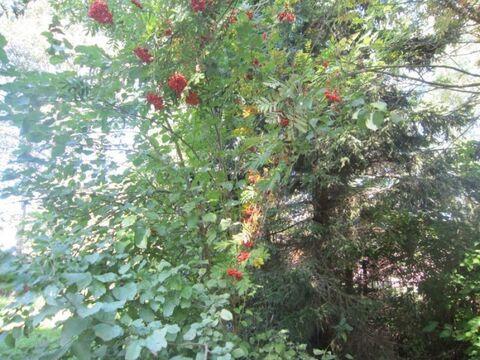 Дача в лесу - Урожай, Конаковский мох, 110 км. от Москвы - Фото 2