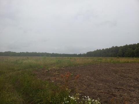 Продажа поляны в лесу 10 га на берегу озера - Фото 5