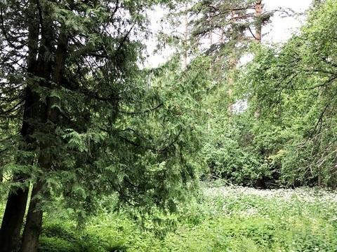 Лесной участок 25 соток на Ярославском шоссе - Фото 3