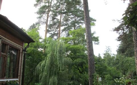 17 соток хвойного леса для постоянного проживания . Закрытый поселок в - Фото 2