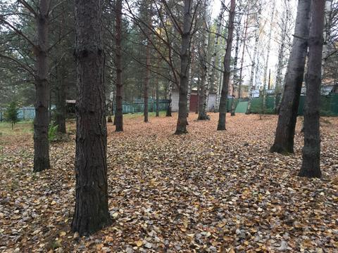 Продается участок в сосновом бору с баней 226 кв.м. на 1линии р. Волга - Фото 3