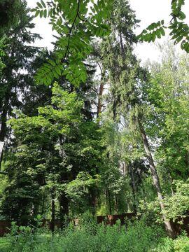 Участок 16 соток с лесными деревьями, Правдинский - Фото 1