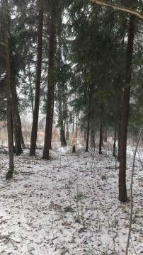 12 соток с Лесными Деревьями. - Фото 2