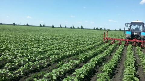 Продам 3000 Га с/х земли и действующее сельхозпредприятие в Пензенской - Фото 1