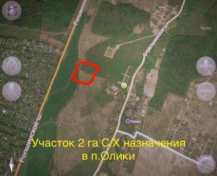 Участок 2га Сельхоз Назначения в деревне Олики. - Фото 2