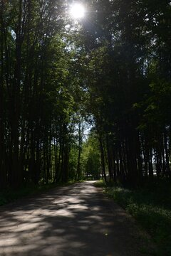Два Ежа, Иваньково, 10 соток, 18 км от города - Фото 1