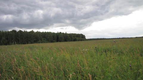Продается участок 12 соток с баней 40 м2 в деревне Тютьково, Ступински - Фото 2