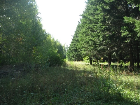 Роща (лесной участок) 330 Га в Воронеже, под дачный поселок. - Фото 1