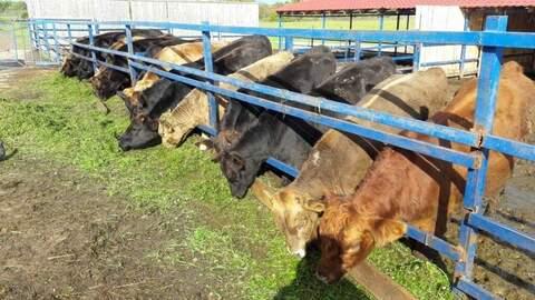 Продажа сельхоз производства 2732 кв. м - Фото 1