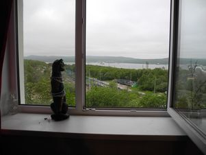 Продажа комнаты, Мурманск, Ул. Сафонова - Фото 1