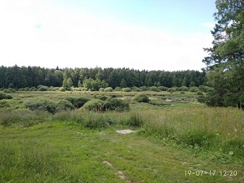 Судогодский р-он, Чамерево с, земля на продажу - Фото 3