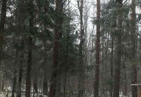 12 соток с Лесными Деревьями. - Фото 5