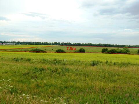 Спас-Конино село участок 8 гектар Тульская область Алексинский район - Фото 1