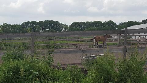 Продается землевладение-усадьба на участке 15 га, Кисловодск - Фото 3