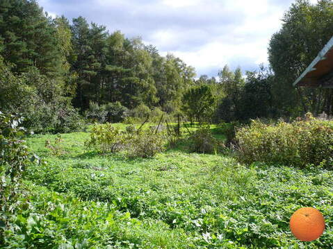 Продается участок, Минское шоссе, 18 км от МКАД - Фото 2