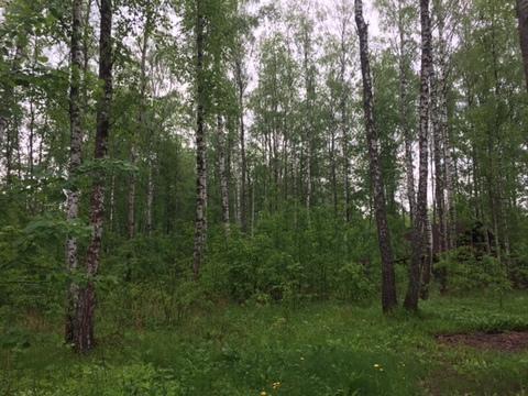 Участок, 12,5 соток с лесом, ИЖС, д. Панино Чеховский район - Фото 4