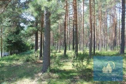 Участок в краю сосен и озер - Фото 4
