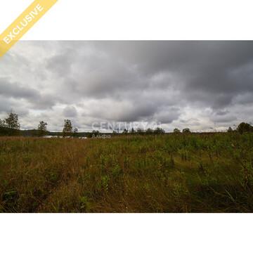 Продажа земельного участка 1,25 Га в д. Гомсельга на 1 береговой линии - Фото 4