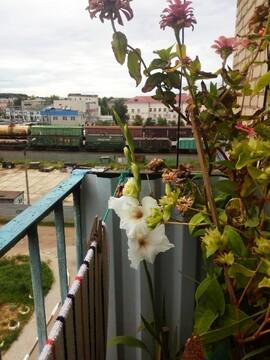 Продам 4 ком. квартиру в Балабаново, ул.Коммунальная - Фото 5
