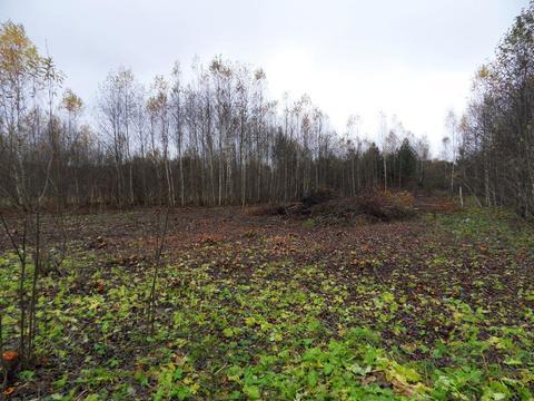 Два смежных участка в селе Стромихино Ивановской области. - Фото 5