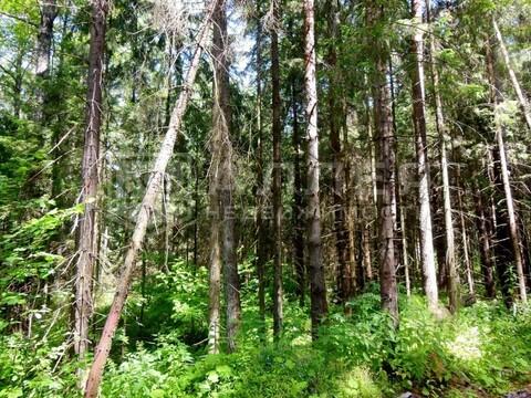 Лесной участок 8 сот. - Фото 2
