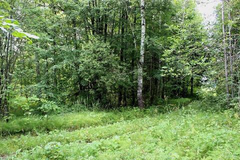 Продам лесной участок 15 соток в д. Гришино. - Фото 3