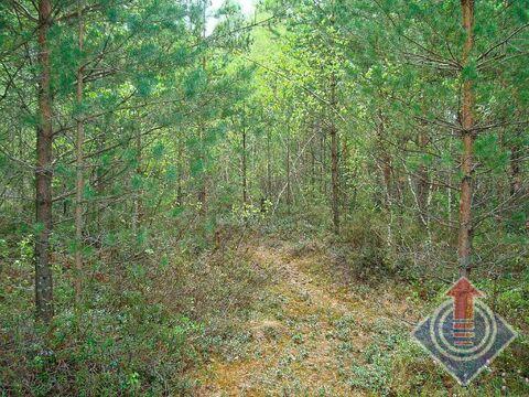 Продажа земельного участка 12 соток в СНТ Омхово у д. Митяево - Фото 2