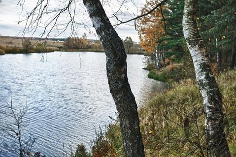 Участок 5,5 соток на краю леса, СНТ Дубрава, Климовск, Подольск. - Фото 2