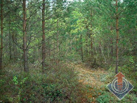 Продажа земельного участка 12 соток в СНТ Омхово у д. Митяево - Фото 1