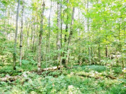 45 соток в лесу! Калужское шоссе, 70 км - Фото 3