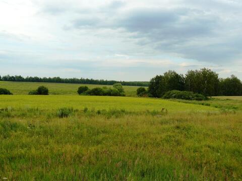 Спас-Конино село участок 8 гектар Тульская область Алексинский район - Фото 2