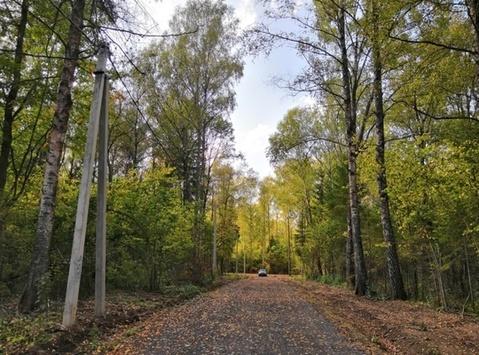 Продаётся земельный участок 8 соток с лесными деревьями, рядом с го. - Фото 2