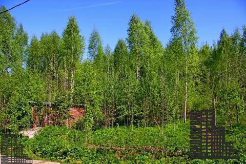 Земельный участок у озера в лесу, электричество, 55 км - Фото 2