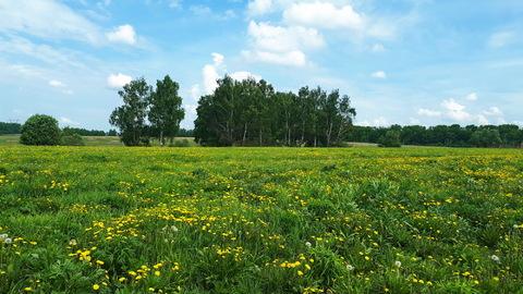 1га для ЛПХ, окраина деревни Ненашево, граничит с оврагом и прудиком - Фото 2