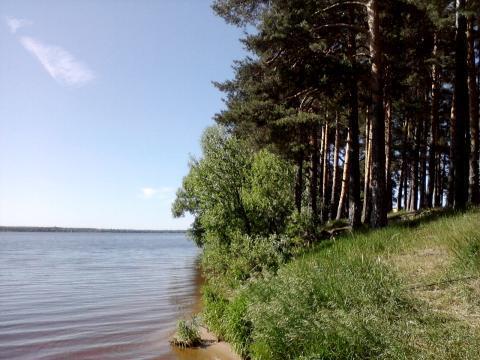 Участок на 1 береговой линии р. Волга, с вековыми соснами г.Конаково. - Фото 1