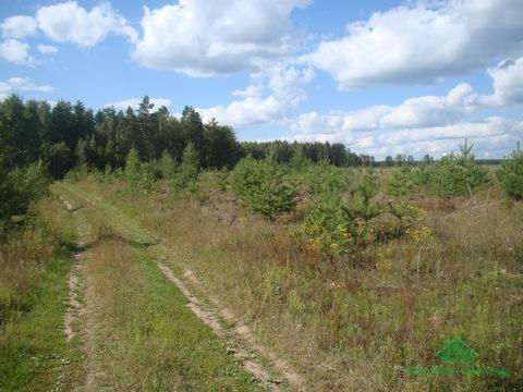 4,2 Га С/Хпроизводство в д.Ельцы - 85 км от МКАД - Фото 5