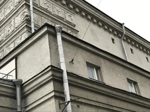 Продается Магазин. , Санкт-Петербург г, Кондратьевский проспект 44 - Фото 2