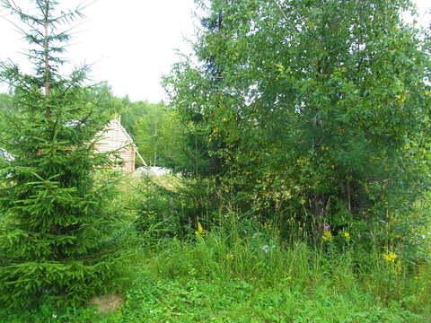 Земельный участок 8 соток пос.Лесные пруды у д.Шапкино - Фото 3