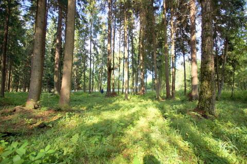 Продаю лесной участок - Фото 1