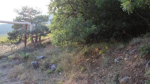 Участок 6 соток с видом на море и виноградники в Алупке - Фото 2