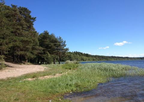 Продается участок у Финского залива,48 соток, дер.Валяницы - Фото 4