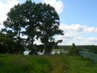 Участок 42 сотки до р. Волга 180 метров третья линия, в д. Новое село. - Фото 2